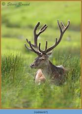 red-deer-67.jpg