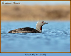 red-throated-diver- 69.jpg