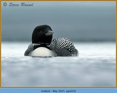 great-northern-diver-33.jpg