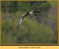 osprey-19.jpg