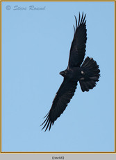 raven-44.jpg