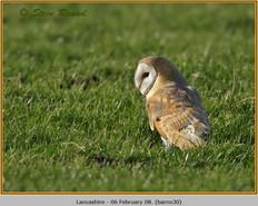 barn-owl-30.jpg