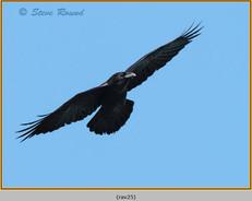 raven-25.jpg