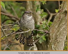 cuckoo-23.jpg