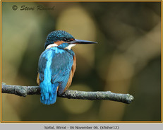 kingfisher-12.jpg