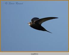 swift-21.jpg