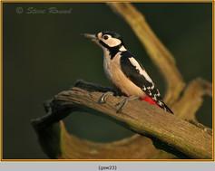 gt-s-woodpecker-23.jpg