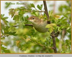 reed-warbler-07.jpg