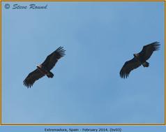black-vulture-03.jpg