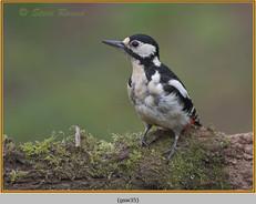 gt-s-woodpecker-35.jpg