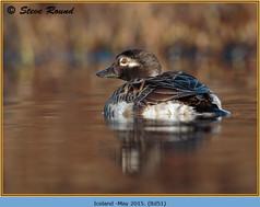 long-tailed-duck-51.jpg