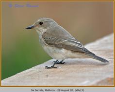 spotted-flycatcher-13.jpg