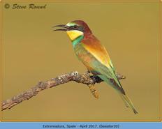 bee-eater-20.jpg
