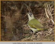green-woodpecker-04.jpg