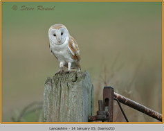 barn-owl-21.jpg