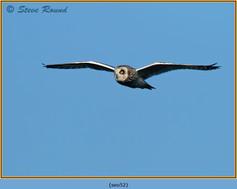 short-eared-owl-52.jpg