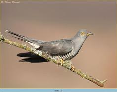 cuckoo-113.jpg