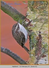 treecreeper-15.jpg