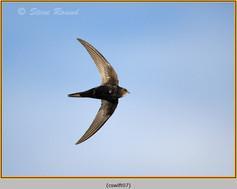 swift-07.jpg