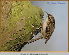 treecreeper-18.jpg