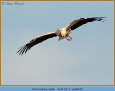white-stork-32.jpg