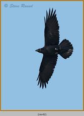 raven-42.jpg