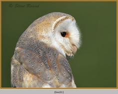barn-owl(c)-01.jpg