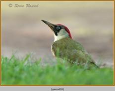 green-woodpecker-09.jpg