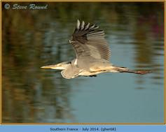 grey-heron-68.jpg