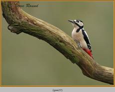 gt-s-woodpecker-27.jpg