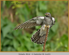 cuckoo-02.jpg