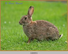rabbit-01.jpg