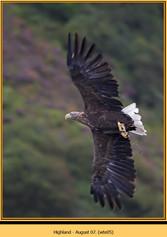 white-tailed-eagle-05.jpg