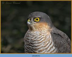 sparrowhawk-31.jpg