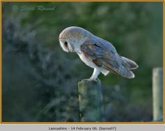 barn-owl-07.jpg