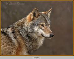 wolf-04.jpg