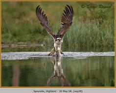 osprey-28.jpg