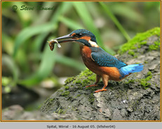kingfisher-04.jpg