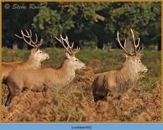 red-deer-90.jpg