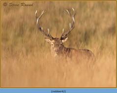 red-deer-42.jpg