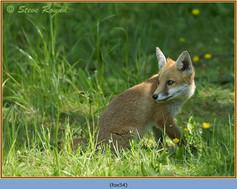 fox-54.jpg