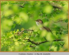 reed-warbler-08.jpg
