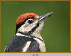 gt-s-woodpecker-03.jpg