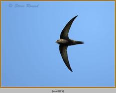 swift-15.jpg