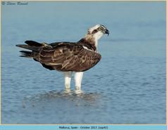 osprey-42.jpg