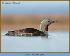 red-throated-diver- 91.jpg