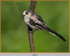 long-tailed-tit-51.jpg