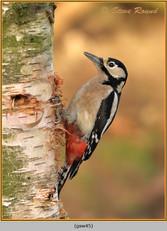 gt-s-woodpecker-45.jpg