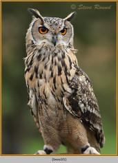 bengal-eagle-owl-05.jpg