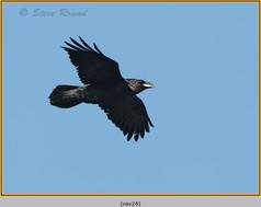 raven-24.jpg